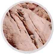 Chuckwalla, Sauromalus Ater Round Beach Towel