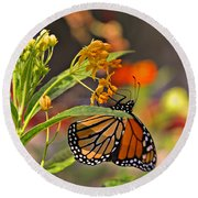 Round Beach Towel featuring the photograph Clinging Butterfly by Matalyn Gardner
