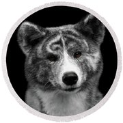 Closeup Portrait Of Akita Inu Dog On Isolated Black Background Round Beach Towel