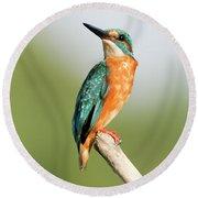Common Kingfisher Alcedo Atthis Round Beach Towel