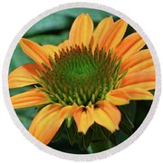 Coneflower  Round Beach Towel by Eva Kaufman