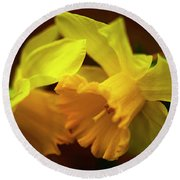Round Beach Towel featuring the photograph 2 Daffodils by John Harding