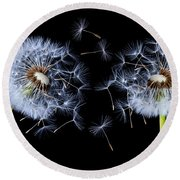 Round Beach Towel featuring the photograph Dandelion On Black Background by Bess Hamiti
