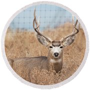 Deer Round Beach Towel