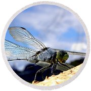Dragonfly On A Mushroom 001  Round Beach Towel