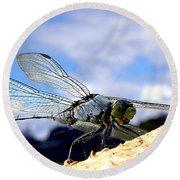 Dragonfly On A Mushroom 001  Round Beach Towel