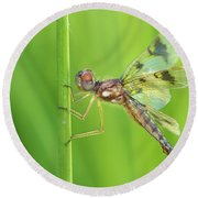 Eastern Amberwing Round Beach Towel