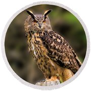 Eurasian Eagle Owl Perched On A Post Round Beach Towel