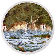 Fallow Deer In England Round Beach Towel by Chris Smith
