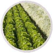 Field Of Organic Lettuce Round Beach Towel