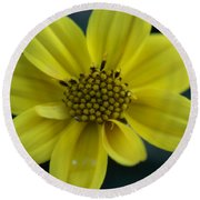 Round Beach Towel featuring the photograph Flower by Heidi Poulin