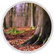 Round Beach Towel featuring the photograph Forest Floor by Will Gudgeon