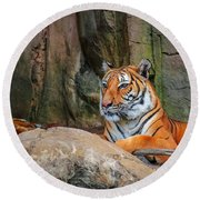 Fort Worth Zoo Tiger Round Beach Towel