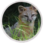 Gray Fox In The Grass Round Beach Towel