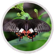 Great Mormon Butterfly Round Beach Towel