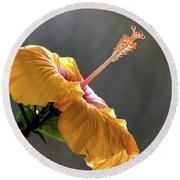 Hibiscus In Bloom Round Beach Towel by Pravine Chester