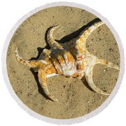 Round Beach Towel featuring the photograph Lambis Arthritica Spider Conch by Frank Wilson