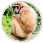 Round Beach Towel featuring the photograph Lar Gibbon by Alexey Stiop