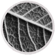 Round Beach Towel featuring the photograph Leaf by Chevy Fleet
