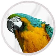 Macaw Bird Round Beach Towel