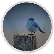 Mountain Bluebird 2 Round Beach Towel