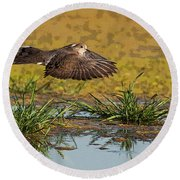 Round Beach Towel featuring the photograph Mourning Dove In Flight by Tam Ryan