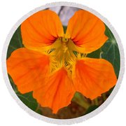 Round Beach Towel featuring the photograph Nasturtium by Stephanie Moore