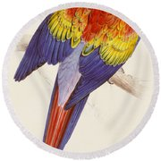 Red And Yellow Macaw Round Beach Towel by Edward Lear