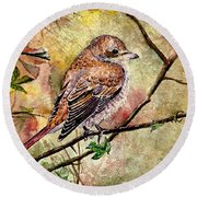 Red Backed Shrike Round Beach Towel