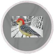 Red Bellied Woodpecker In Winter Round Beach Towel by Janette Boyd