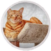 Red Cat Round Beach Towel