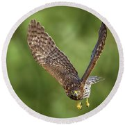 Round Beach Towel featuring the photograph Red-tailed Hawk by Peter Lakomy
