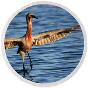 Reddish Egret Ocean Round Beach Towel