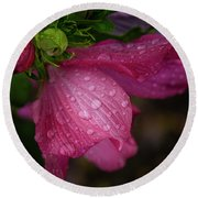 Rose Of Sharon Hibiscus With Rain Drops Round Beach Towel by Garry McMichael