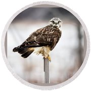 Rough-legged Hawk Round Beach Towel