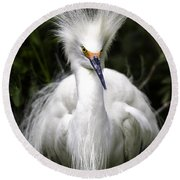 Snowy Egret Round Beach Towel by Fran Gallogly