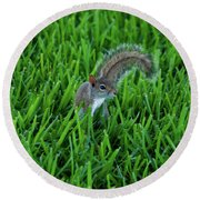 Round Beach Towel featuring the photograph 2- Squirrel by Joseph Keane