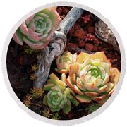 Succulents Round Beach Towel