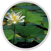 Round Beach Towel featuring the photograph The Lotus Pond by Paul Mashburn