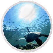 Turtles View Round Beach Towel