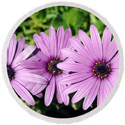 The African Daisy 2 Round Beach Towel