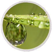 Water Drops On The Grass Round Beach Towel