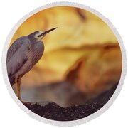 White-faced Heron At The Beach Round Beach Towel