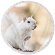 White Squirrel Round Beach Towel by Vizual Studio