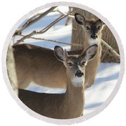White Tailed Deer Smithtown New York Round Beach Towel by Bob Savage