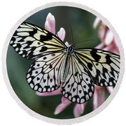 White Tree Nymph Butterfly Round Beach Towel