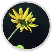 Wild Sunflower Stony Brook New York  Round Beach Towel