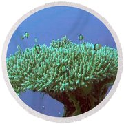 Zanzibar Island Sea  Coral Reef Vegitation Bio Diversity Of Exotic Fish Plants And  Organisims Zanzi Round Beach Towel