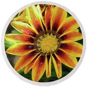 Round Beach Towel featuring the photograph Nice Gazania by Elvira Ladocki