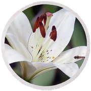 White Lily Round Beach Towel by Elvira Ladocki